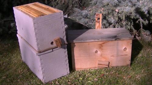 Swarm Traps And Bait Hives Survivorbees Com
